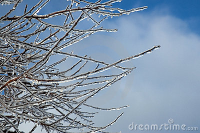 Iced branches against a Blue Sky