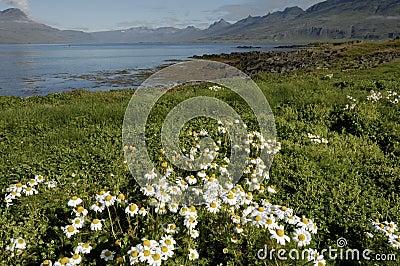 Iceland summer landscape.