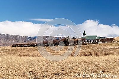 Iceland wheat field
