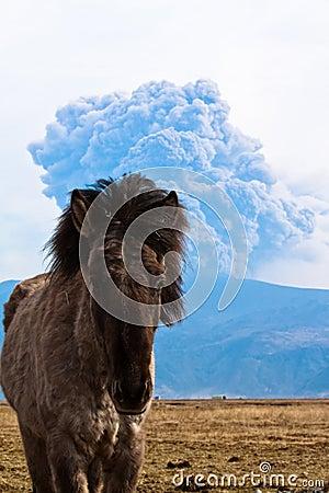 Icelandic horse and volcano