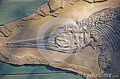 Ichtyosaurus fossil