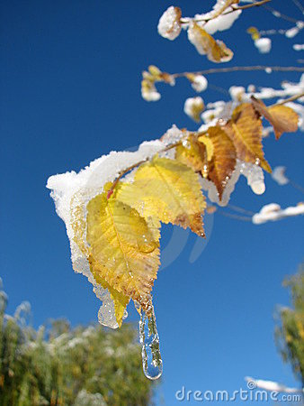 Free Icicle And Snow On A Leaf Stock Photos - 1575373