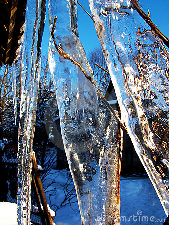 Icicle whit plants
