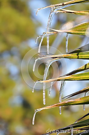 Palm leaf icicles