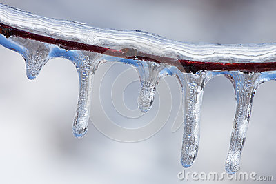 Icicles on Twig