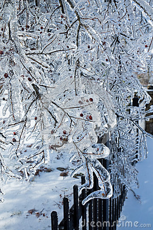 Icy tree branches after freezing rain
