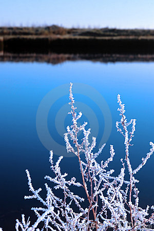 Free Icy Twigs In Snow Against Cold Blue Sky And River Stock Images - 21582794