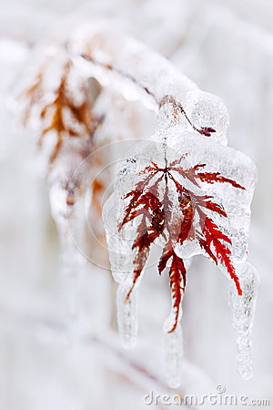 Free Icy Winter Leaf Stock Photos - 36569233