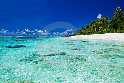 Ideal snorkeling beach with coral and palm trees