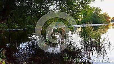 Ideia da lagoa com árvore pendendo sobre e das reflexões sobre a água Saliência da beira do lago com reflexão clara da água vídeos de arquivo