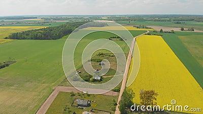 Ideia a?rea dos campos de Bielorr?ssia em maio com campos da colza vídeos de arquivo