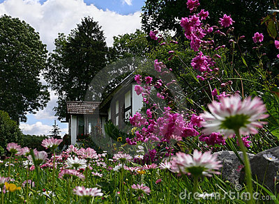 Idyll scenery: country house & plenty of daisies