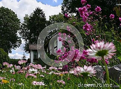 Idyll scenery: country house & plenty of daisies