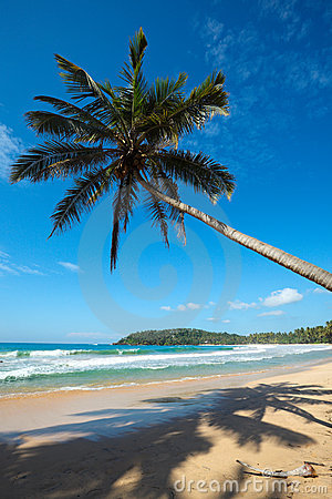 Idyllic beach with palm. Sri Lanka