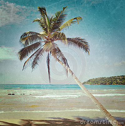 Idyllic beach with palm. Sri Lanka