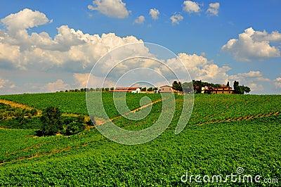Idyllic day in Tuscany, Italy