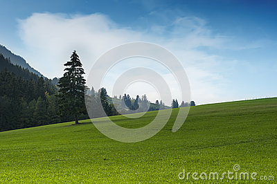 Idyllic green grass hill with single tree