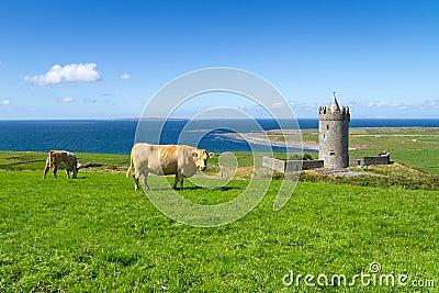 Idyllic irish scenery