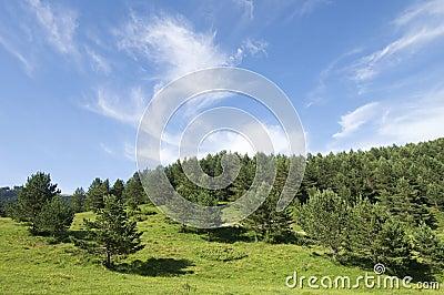 Idyllic landscape