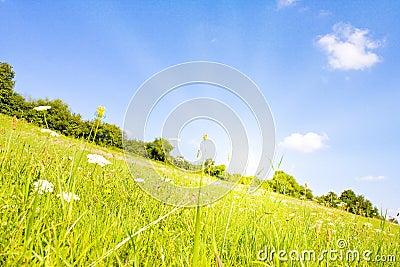 Idyllic lawn