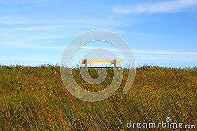 Idyllic lawn with bench