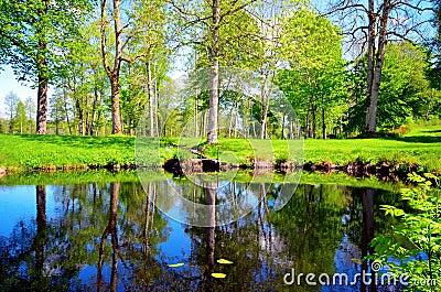 Idyllic meadow