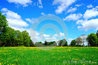 Idyllic meadow