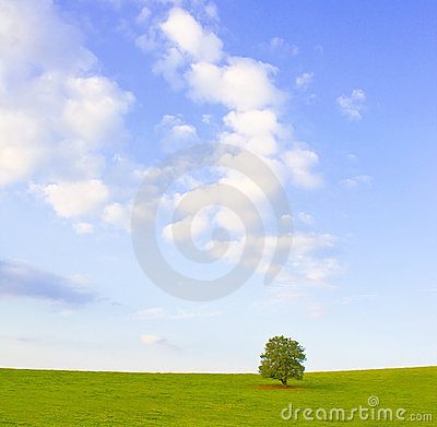 Idyllic meadow with tree