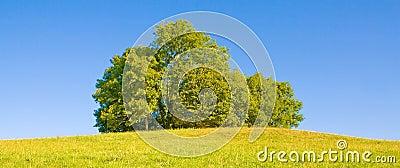 Idyllic meadow with tree