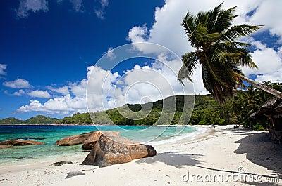 Idyllic tropical beach