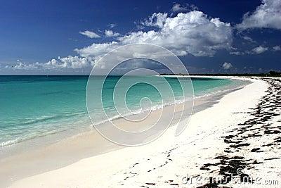 Idyllic tropical beach scene
