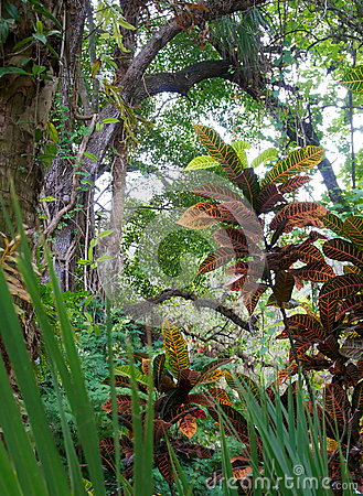 Idyllic tropical scene