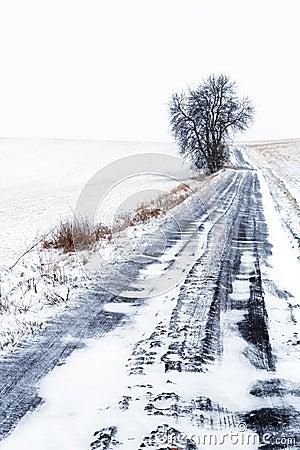Idyllic winter meadow