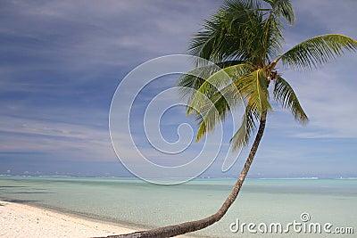 Idyllisk sandig strand