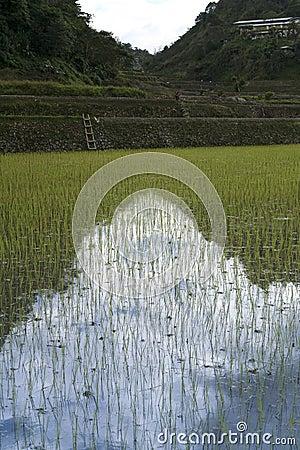 Ifugao rice terraces banaue philippines