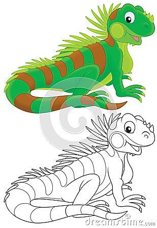 Free Iguana Stock Photos - 32050453