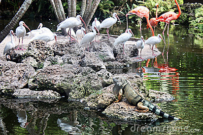 Iguana and Flamingo Birds