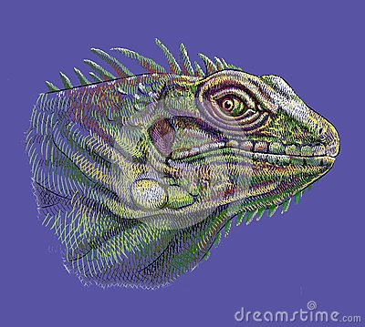 Iguana head artistic drawing