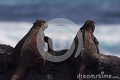 Iguana Pals