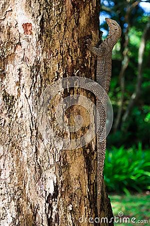 Iguana reptile on a tree trunk