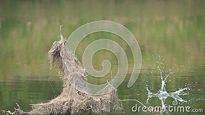 Ijsvogel visserij