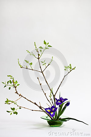 Free Ikebana With Irises On The Light Background Royalty Free Stock Photos - 30195578