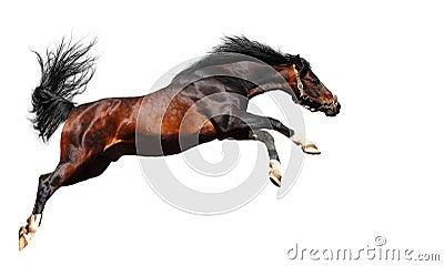 Il cavallo arabo salta