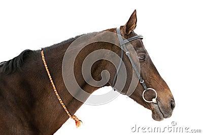 Il cavallo ha isolato