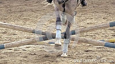 Il cavallo salta sopra l'ostacolo al rallentatore Front View video d archivio