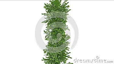 il fiore fertile 4k lascia ai raccolti gli arbusti crescita dell'erba della pianta dei cespugli stock footage