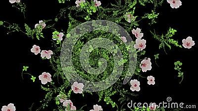il petalo fertile del fiore 4k lascia ai raccolti gli arbusti fondo crescente dell'erba della pianta dei cespugli archivi video