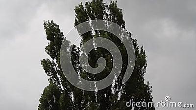 Il souffle le vent et déplace des arbres banque de vidéos
