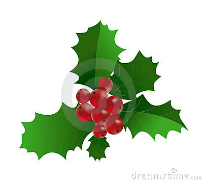 Ilex aquifolium - Branch of Holly with red berri