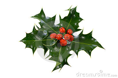 Ilex,holly, christmas decoration